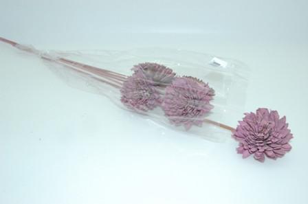 Shola Zinnia 8Cm O/S 5Pc Lilac