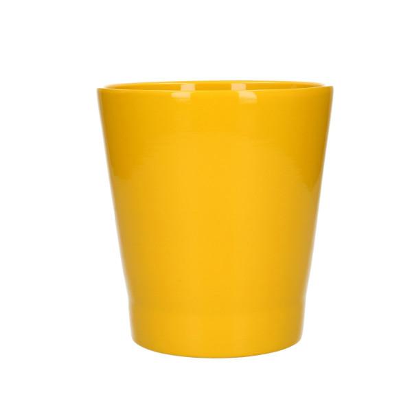 Phalaenopsis pot d13*14cm yellow